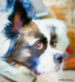 180-Duke-July-Dogs-010716_002