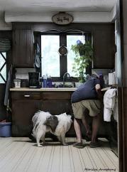 180-Feeding-Time-Dogs-fourth-July-040716_312