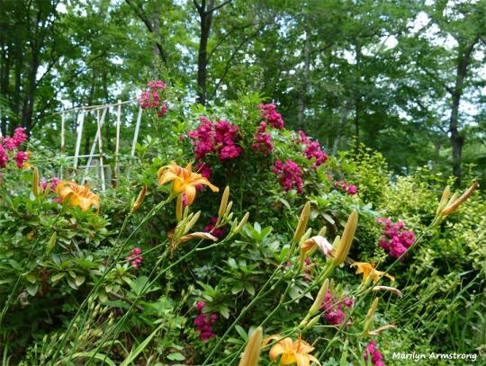 180-July-First-Garden-010716_016