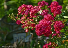 180-Roses-Fourth-July-040716_202