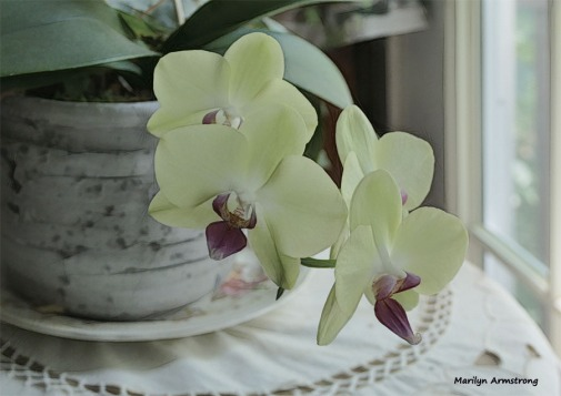 180-Serried-Four-Orchids- 07032018_008