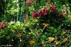 180-Wild-Garden-3-080716_024