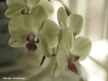 300-four-orchids-210718_014
