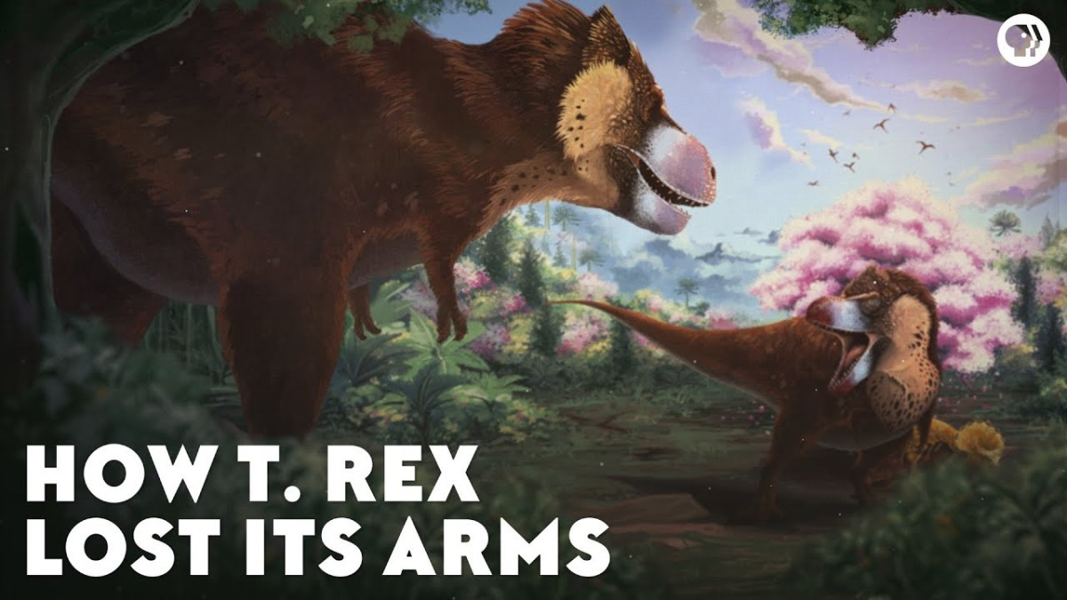 How Did T-Rex Lose ItsArms?