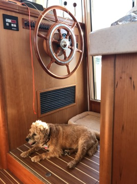 Rosie the boat dog