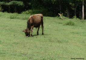 180-Brown-Calf-Farm-GAR-170818_114