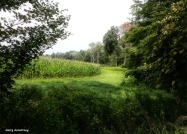 180-Corn-Field-Farm-GAR-170818_098