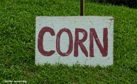 And of course, CORN ...
