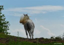 180-Horse-Farm-GAR-170818_050