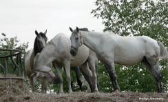 180-Horses-Farm-MAR-170818_057
