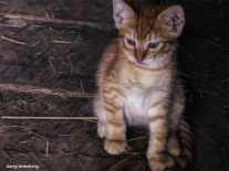 In the barn, one kitten. Photo: Garry Armstrong