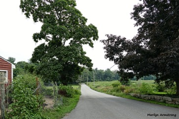 180-Road-near-Coop-Farm-MAR-170818_049