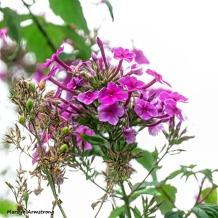 180-Square-Pink-Flower-MAR-170818_039