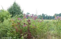 180-Wildflowers-GAR-170818_002
