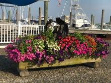 marina - planter 1