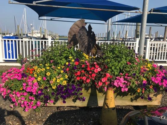 marina - planter 2