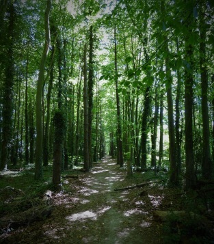 Sue Vincent's path in the woods