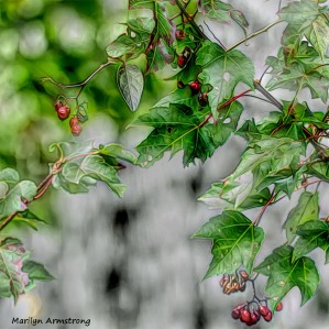 180-3D-Red-Berries-Manchaug-MAR-22092018_045