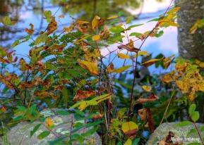 180-Bright-Leaves-River-RI-MAR-29092018_0034