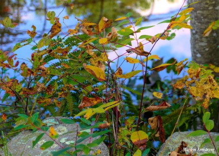 180-Bright-Leaves-River-RI-MAR-29092018_0034