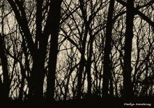 180-BW-Trees-and-Sunrise-03102016_11