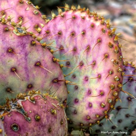 180-Square-Pink-Cactus-MAR-Sunday-011016_087