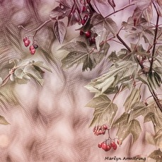 180-Square-Pink-with-Red-Berries-Manchaug-MAR-22092018_043