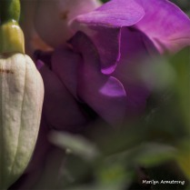 300-square-macro-pink-fuschia-051416_016.jpg