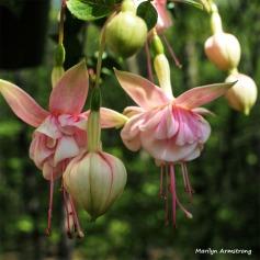 Two years ago pink fuchsia
