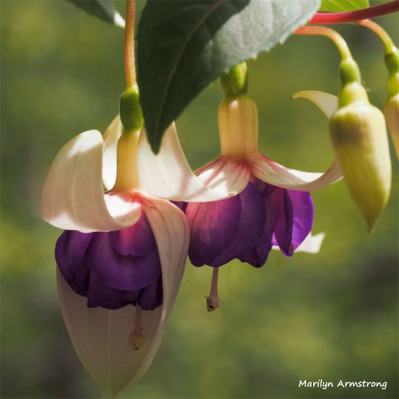 300-square-purple-whie-fuschia-051416_019
