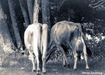 180-BW-Cows-Tails-Farm-MAR-170818_084