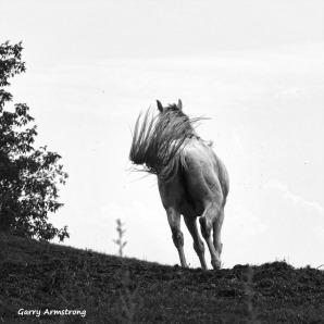 180-BW-Horse-Tail-Farm-GAR-170818_050