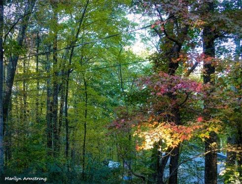 180-Foliage-Sunny-sunset-21102018_101