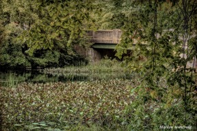 180-Little-Bridge-Over-Manchaug-2-MAR-22092018_114