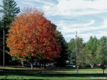 180-Maple-Trees-River-Bend-GAR-05102018_1013