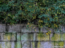 180-Stone-Wall-Downtown-Dam-12102018_039