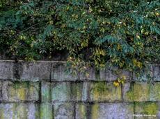 180-Stone-Wall-Downtown-Dam-12102018_039