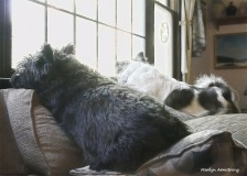 180-Window-Dogs-10192018_ 004jpg