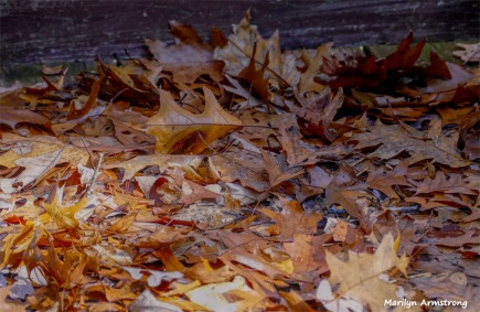 180-2-Leaves-07112018_235