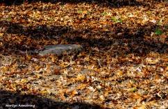 180-2-Rock-Leaves-07112018_239