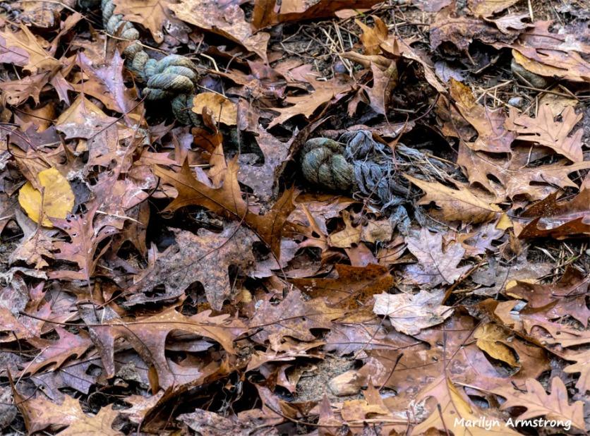 180-2-Rope-Leaves-07112018_212