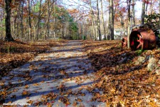 Our leaf-covered driveway.