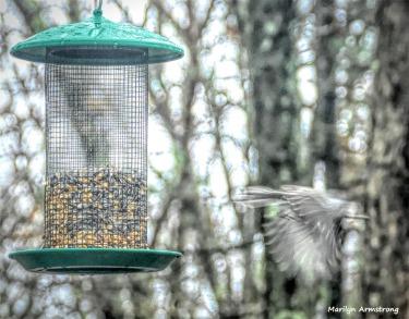 180-In-Flight-Monday-Birds-20181126_306