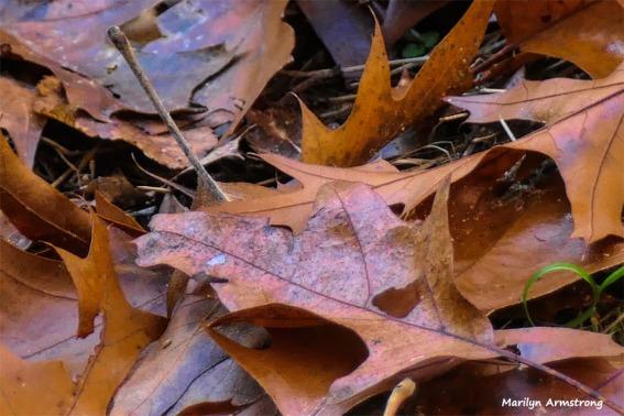 180-Leaves-07112018_218