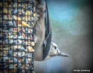 180-Nuthatch-Tuesday-Birds-20181127_416