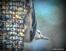 180-Nuthatch-Tuesday-Birds-20181127_416