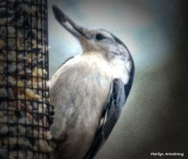 180-Nuthatch-with-Seed-Tuesday-Birds-20181127_406