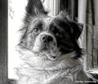 180-Portrait-Duke-Window-08112018_005