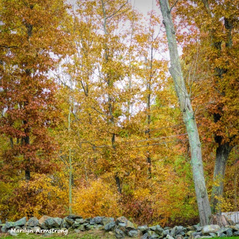 Stone fence and autumn woods