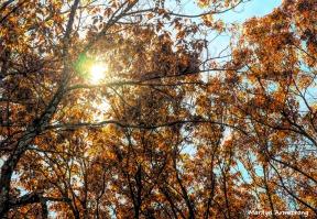 180-sunny-golden-oaks-04112018_040